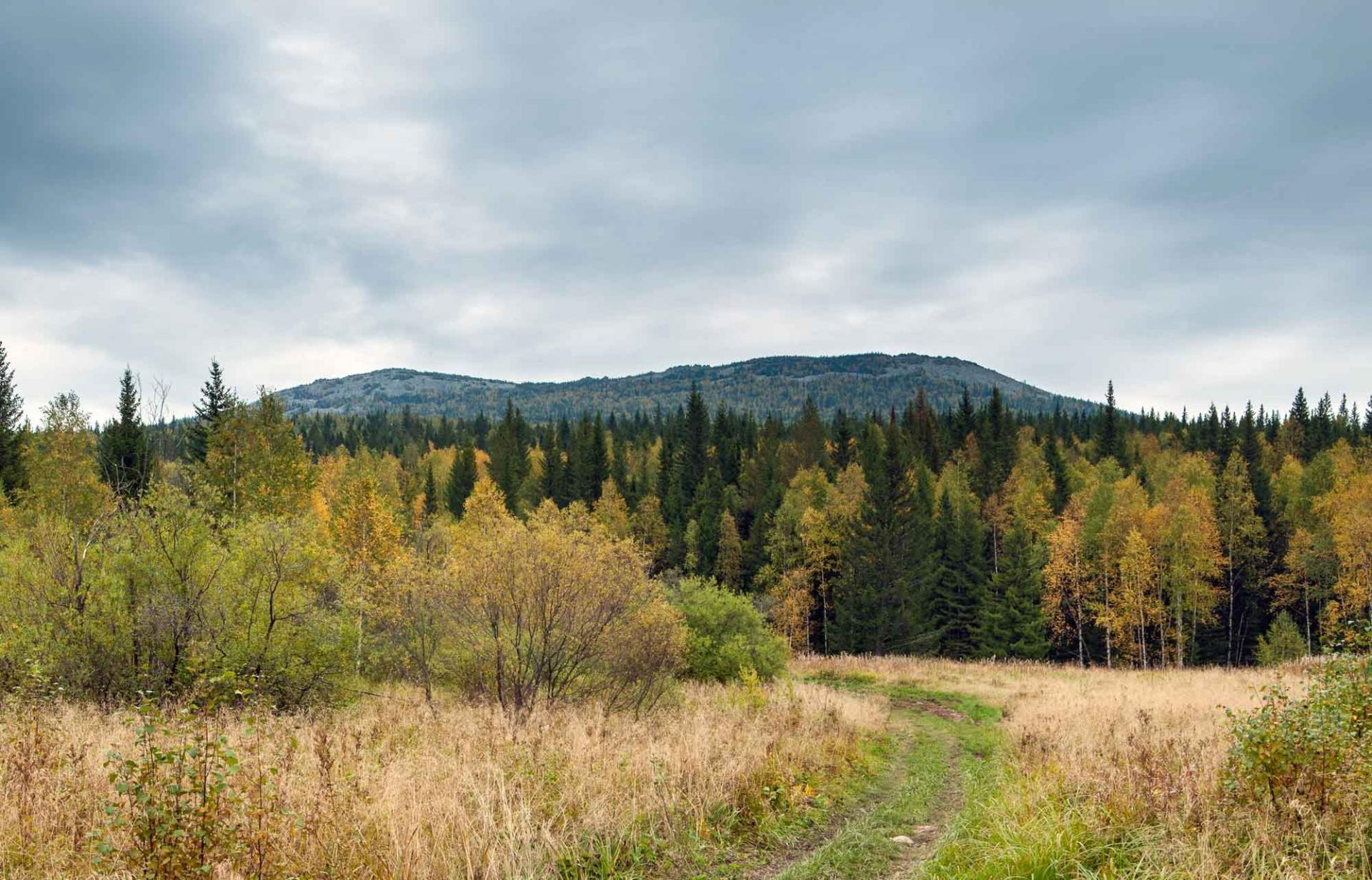 стала победителем, башкирское редколесье фото альпийский